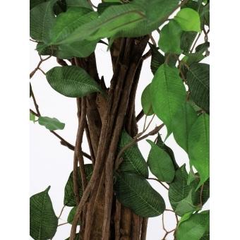 EUROPALMS Ficus Tree Multi-Trunk, 210cm #3