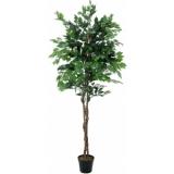 EUROPALMS Ficus Tree Multi-Trunk, 210cm