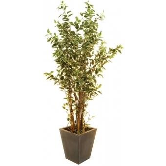 EUROPALMS Ficus tree deluxe, 240cm
