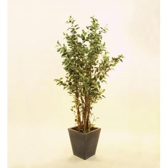 EUROPALMS Ficus tree deluxe, 240cm #2