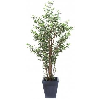 EUROPALMS Ficus tree deluxe, 240cm #3