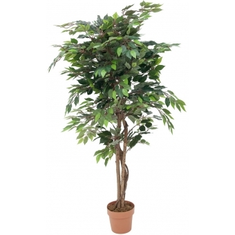 EUROPALMS Ficus with dense crown, 180cm #1