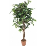 EUROPALMS Ficus with dense crown, 180cm