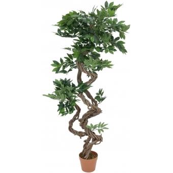 EUROPALMS Ficus spiral trunk, 160cm