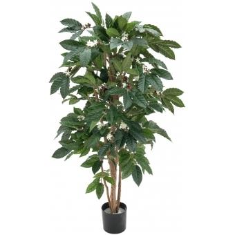 EUROPALMS Coffee tree, 120cm