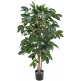EUROPALMS Coffee tree, 120cm