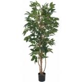 EUROPALMS Coffee tree, 210cm