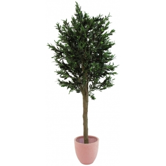 EUROPALMS Olive tree with thick trunk, 200cm