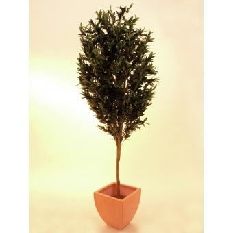 EUROPALMS Olive tree with fruits, 200cm #2