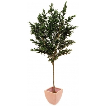 EUROPALMS Olive tree with fruits, 250cm