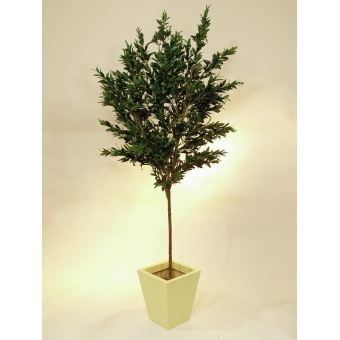 EUROPALMS Olive tree with fruits, 250cm #2