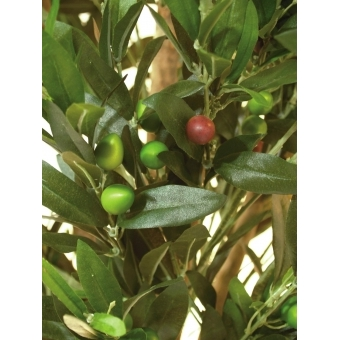 EUROPALMS Olive tree with fruits, 250cm #3