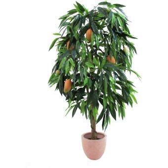 EUROPALMS Mango tree with fruits, 165cm #4