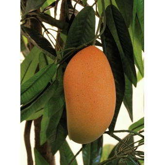EUROPALMS Mango tree with fruits, 165cm #6