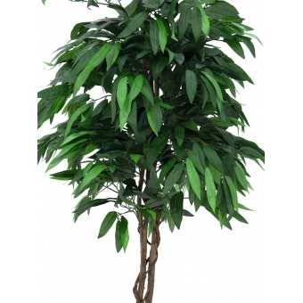 EUROPALMS Jungle tree Mango, 180cm #2