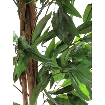 EUROPALMS Jungle tree Mango, 180cm #3