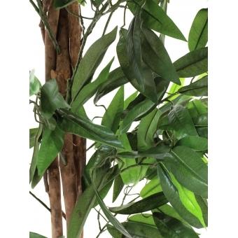 EUROPALMS Jungle tree Mango, 180cm #3