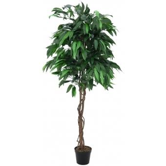 EUROPALMS Jungle tree Mango, 210cm