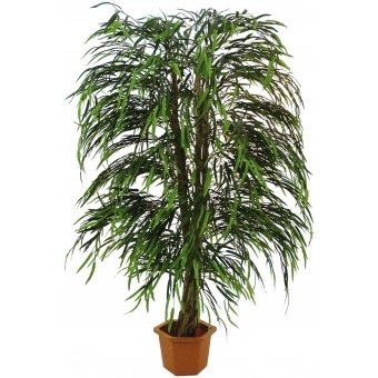 EUROPALMS Willow tree multi leaf, 215cm