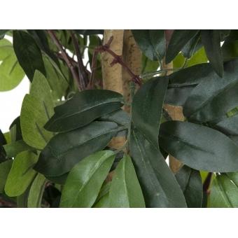 EUROPALMS Mediterranean forest tree, 180cm #2