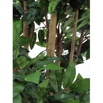 EUROPALMS Mediterranean forest tree, 180cm #3