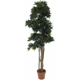 EUROPALMS Mediterranean forest tree, 180cm