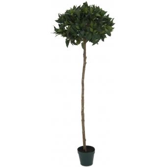EUROPALMS Laurel ball tree, 150cm