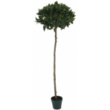 EUROPALMS Laurel ball tree, 150cm