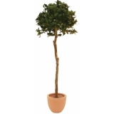 EUROPALMS Laure ball tree, 180cm
