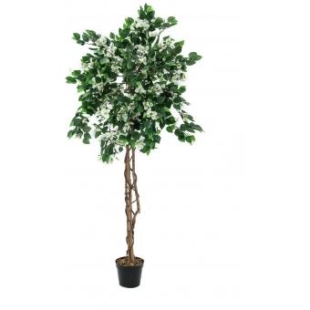 EUROPALMS Bougainvillea, white, 180cm