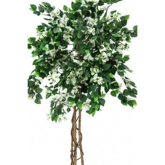 EUROPALMS Bougainvillea, white, 180cm #2