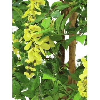 EUROPALMS Wisteria, yellow, 180cm #3