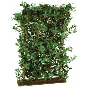 EUROPALMS Ficus Hedge, 90x130cm