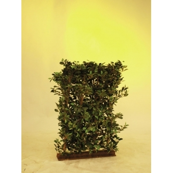 EUROPALMS Ficus Hedge, 90x130cm #2