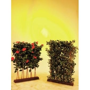 EUROPALMS Ficus Hedge, 90x130cm #3
