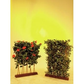 EUROPALMS Ficus Hedge, 90x130cm #4