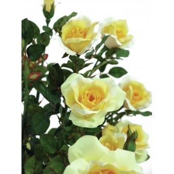 EUROPALMS Rose shrub, light-yellow, 140cm #4