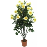 EUROPALMS Rose shrub, light-yellow, 140cm