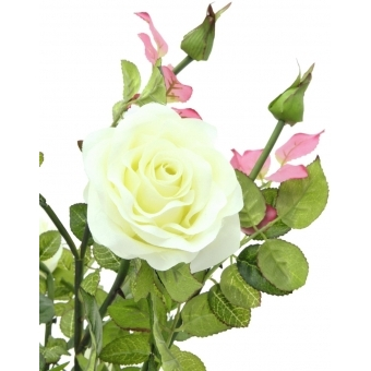 EUROPALMS Rose shrub, cream, 86cm #2