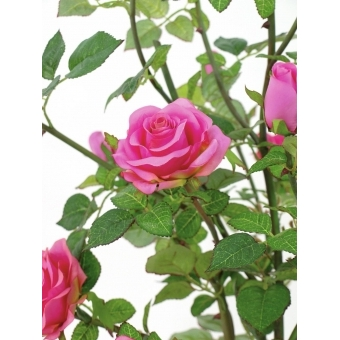 EUROPALMS Rose shrub, cream, 86cm #3