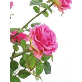 EUROPALMS Rose shrub, cream, 86cm #4