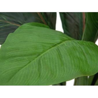 EUROPALMS Sago palm tree, 45cm #2