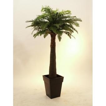 EUROPALMS Fern palm, 180cm #2