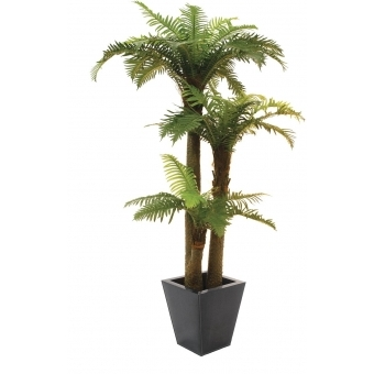EUROPALMS Fern palm, 160cm