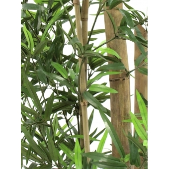 EUROPALMS Bamboo with natural stalks, 150cm #3