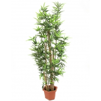 EUROPALMS Bamboo natural trunks, 205cm