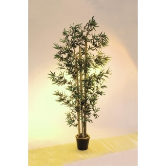 EUROPALMS Bamboo natural trunks, 205cm #3