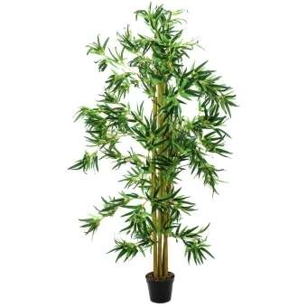 EUROPALMS Bamboo Multi Trunk, 210cm