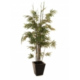 EUROPALMS Bamboo black trunk, 152cm