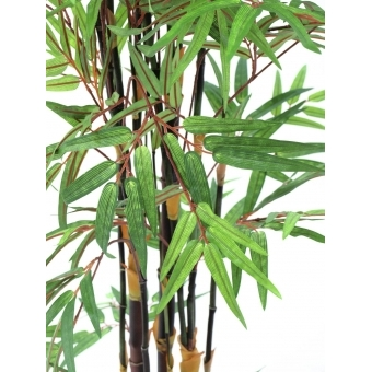 EUROPALMS Bamboo black trunk, 210cm #3